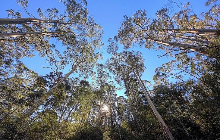 Леса Австралии