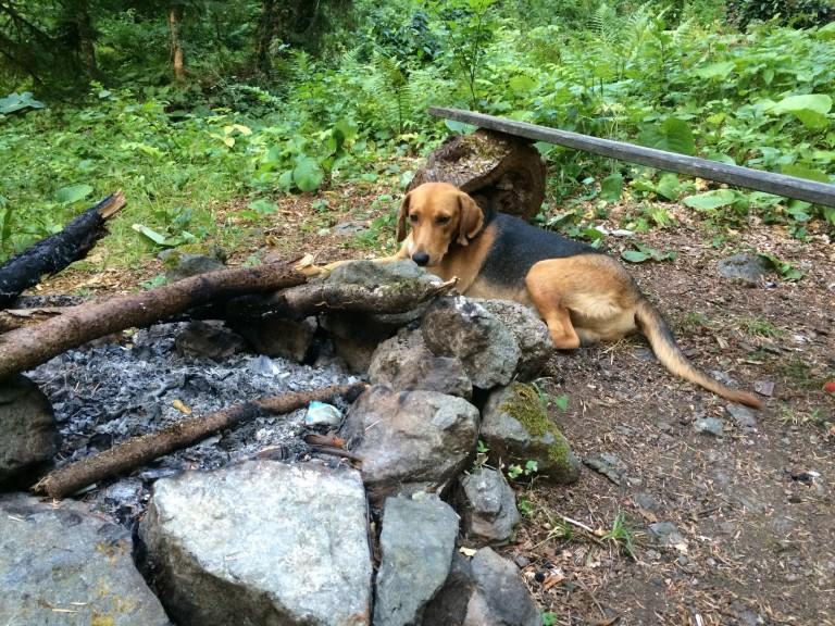 Сторожевой пес в Абхазии